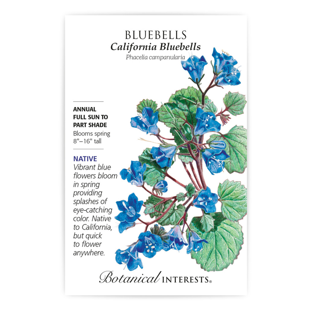 Bluebells California