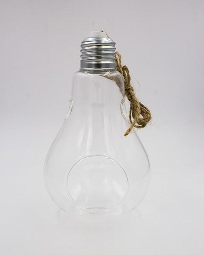 """Air Plant Light Bulb 3""""x5"""""""