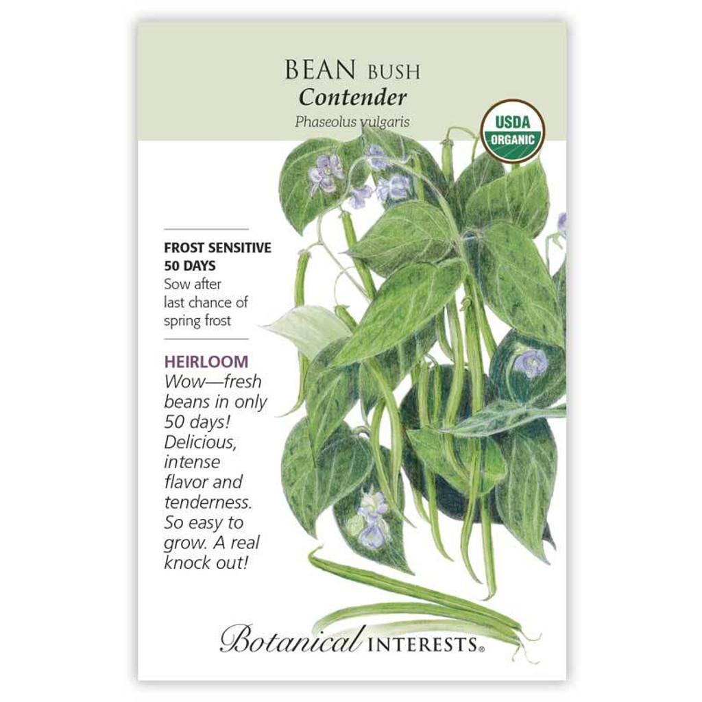 Bean Bush Contender Organic
