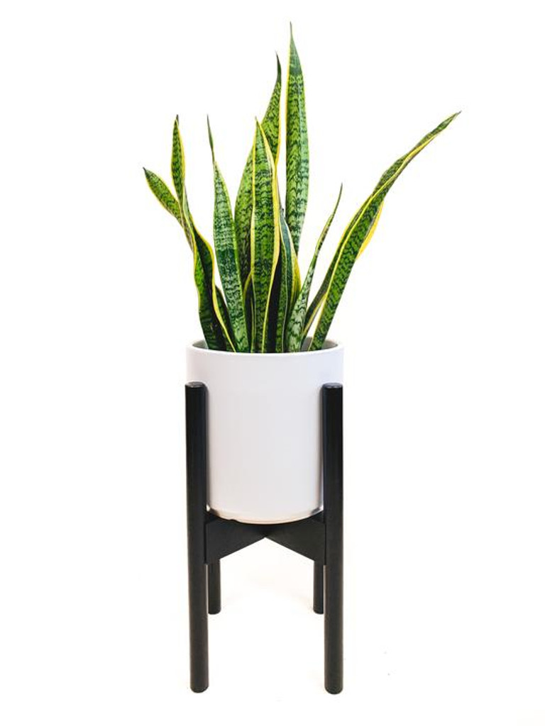 Black with Plant
