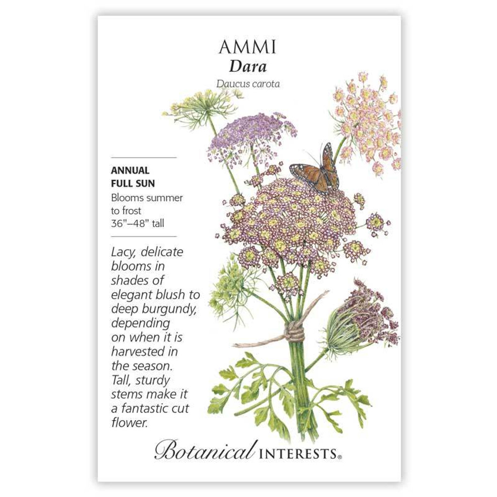 Ammi Dara Seeds