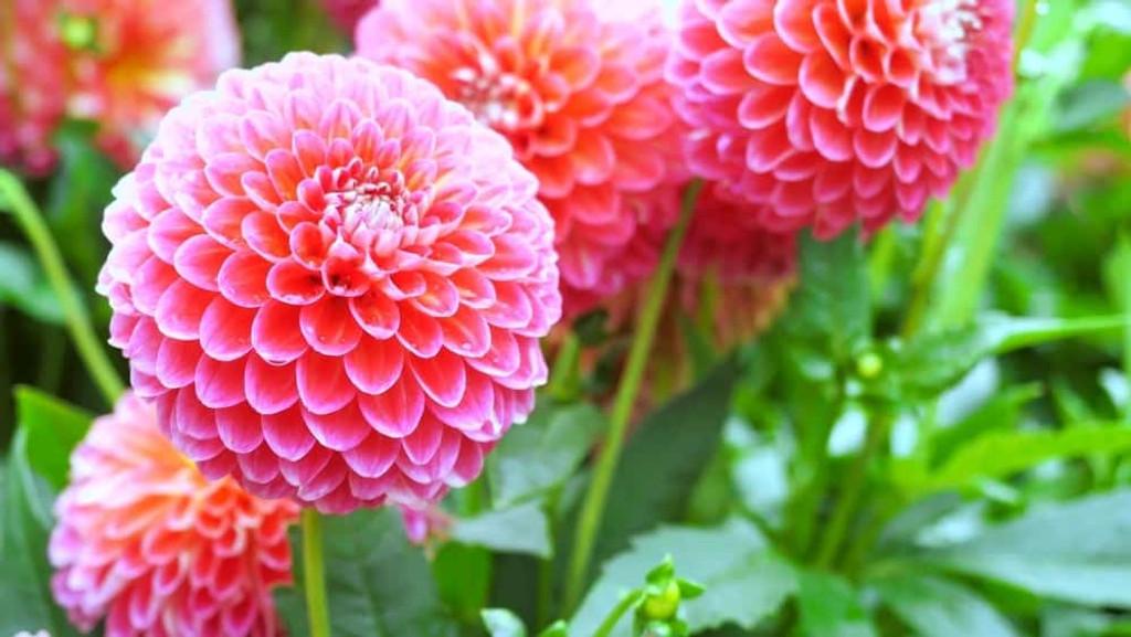 Perennials Assorted 1qt 1g