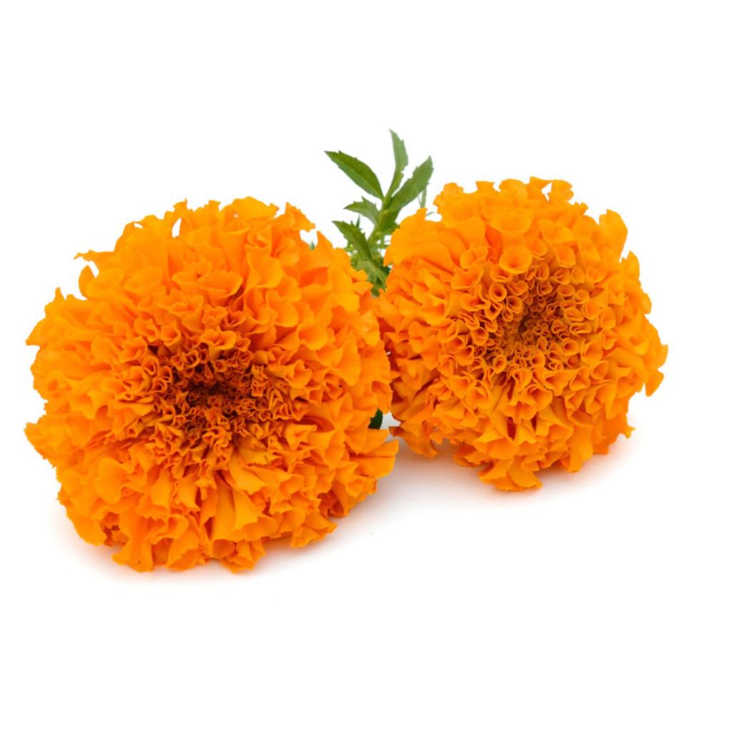 """Marigold 4.5"""" 8"""" and Marigold Topiary 9"""""""