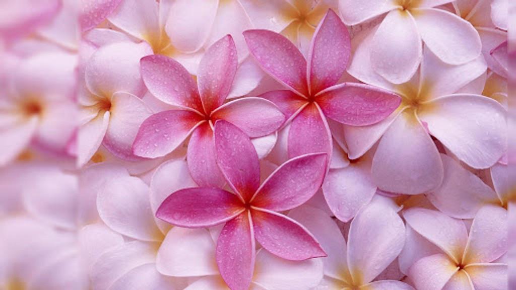 Jasmine Pink