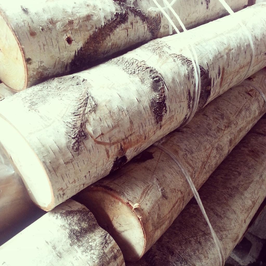 White Birch Logs