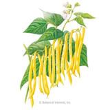 Bean Bush (Yellow) Gold Rush Organic