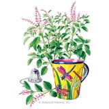 Basil Holy/Tulsi Organic