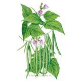 Bean Bush Provider Organic