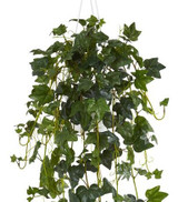 """English Ivy Hardy in a Hanging Basket 8"""""""