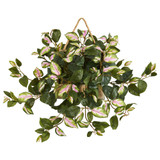 "Hoya Hanging Basket 6"" 8"""