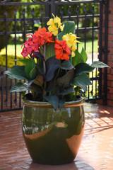 Bronze Orange in a Pot