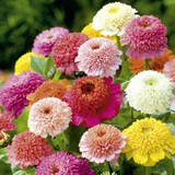 Annuals Assorted