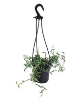 String of Dolphins in a Hanging Basket 6""