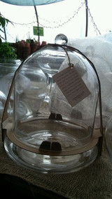Glass Terrarium Cloche