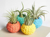 "Air Plant Pot Echinus Design 1.8"" 2.6"" Diameter"