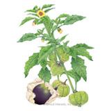 Purple Tomatillo Seeds Organic