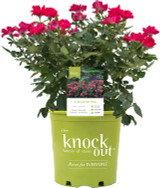 """Roses 'Knockout"""" 3g"""