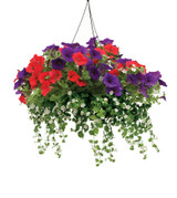 """Annuals Combo Assorted in a Hanging Basket 10"""""""