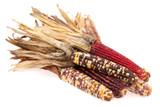 Decorative Indian Corn Large Pkg of 3