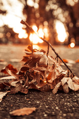 Autumn Decor Dried Floral Assorted