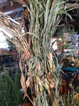 Autumn Corn Stalk 4'-6' Tall