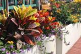 "Houseplants Tropical/Foliage Assorted 2"" to 5"""
