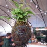 "Kokedama & String Garden 'Plant in Suspension' 6"""