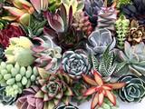 """Terrarium plants 2"""""""