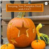 Keeping your pumpkins fresh with Urban Garden Center