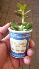 "NYC succulent in ceramic ""Greek coffee cup"""