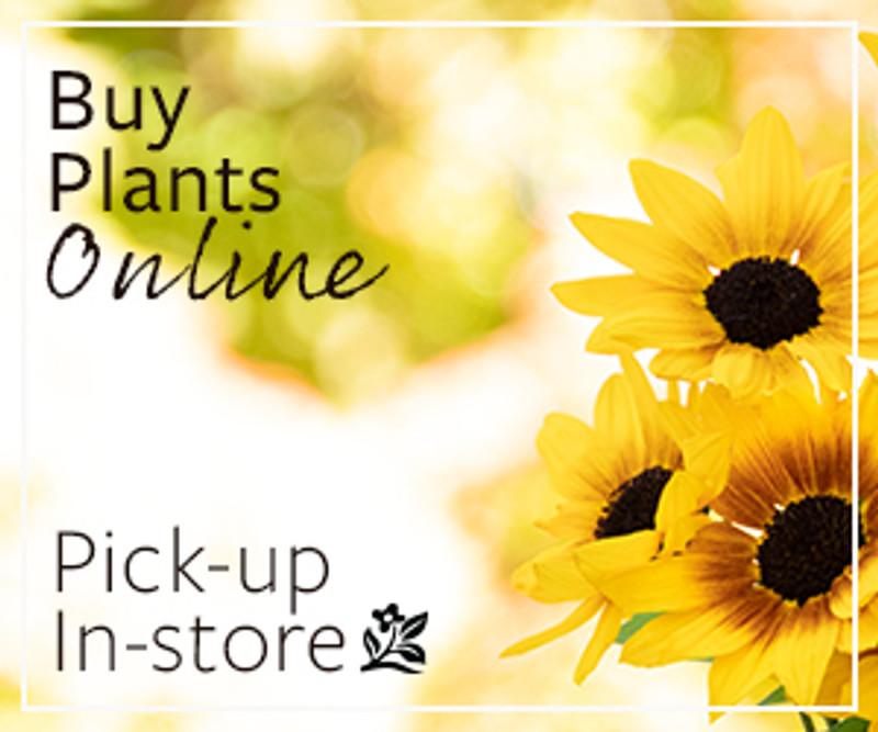 Looking for Monrovia plants?