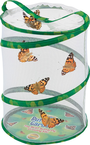 Insect Lore Butterfly Garden, 11.5""