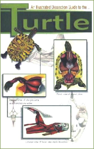 Turtle Dissection Guide
