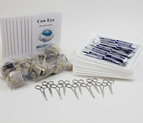 Classroom Cow Eye Dissection Kit