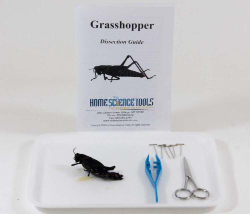 Grasshopper Dissection Kit