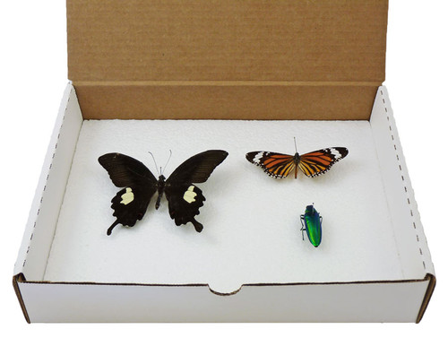 Insect Display Box