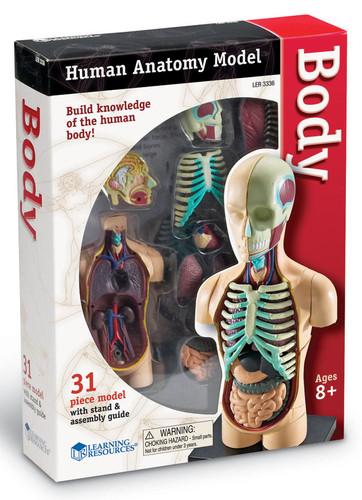 Human Body Model, small