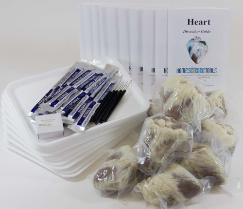 Classroom Sheep Heart Dissection Kit