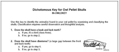 dichotomous key for owl pellet skulls
