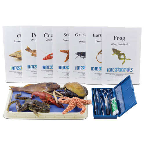 Intermediate Dissection Kit