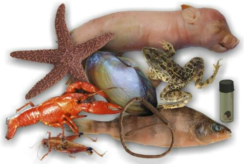 animal specimens