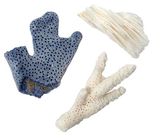 Coral Specimen, Dry