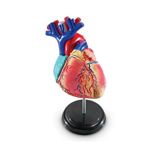Heart Model, small