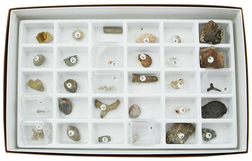 Advanced Fossil Collection, 30 specimens