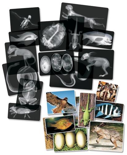 Animal X-Rays Set