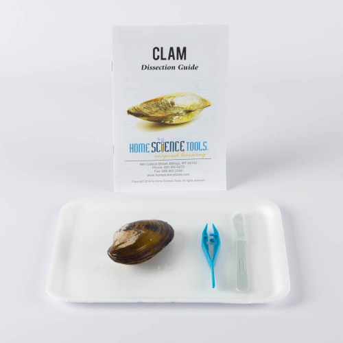 Clam Dissection Kit