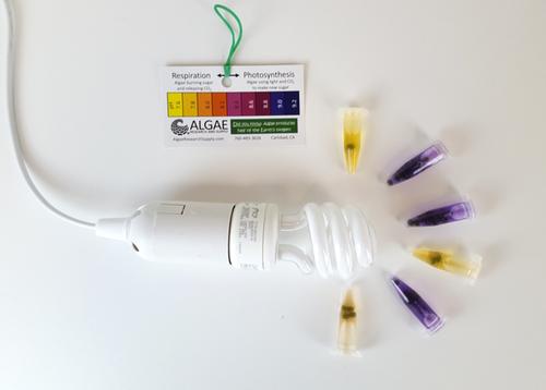 Algae Bead Photosynthesis Kit