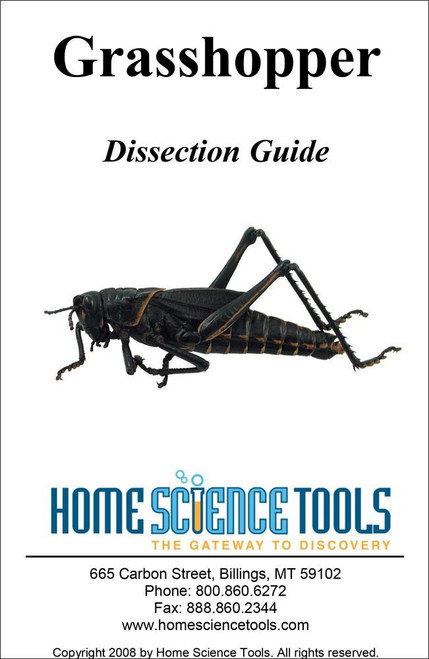 Grasshopper Dissection Guide