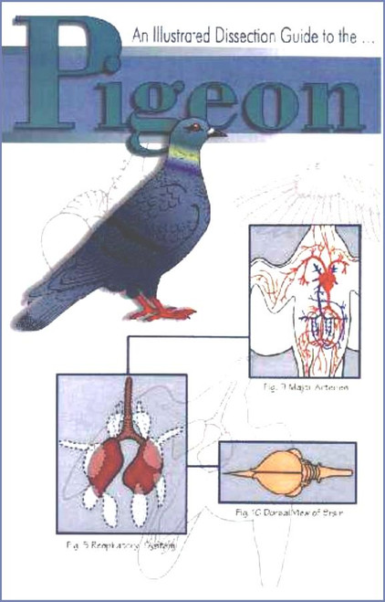 Pigeon Dissection Guide