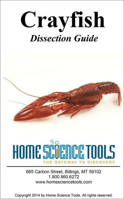 Crayfish Dissection Guide